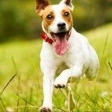 10 bonnes raisons d'adopter un chien en refuge