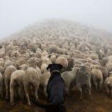 Un photographe rend un magnifique hommage aux chiens de travail