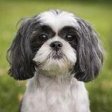 140 chiens retrouvés dans des conditions déplorables dans une maison à plusieurs millions de dollars