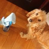 Produits ménagers et animaux domestiques : Ce que vous devez savoir