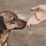 Municipales 2020 : 6 Français sur 10 prêts à voter pour un candidat engagé dans la protection animale