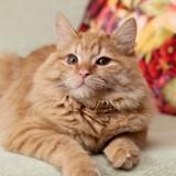 Ce petit garçon dont le chat est décédé fait une rencontre qui va tout changer !