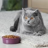 Quelles sont les meilleures croquettes pour chat stérilisé en 2021 ?