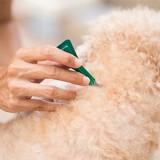 Anti-puces : notre sélection de soins pour chien en 2021