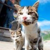 Quand la mafia sicilienne met le feu à des chats pour provoquer des incendies