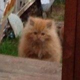 La vie de ce chaton errant a changé lorsqu'il est apparu sur le pas d'une porte pour demander à manger