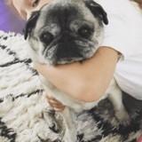 En deuil, Jessica Alba rend un émouvant hommage à sa chienne Sid