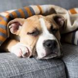 12 signes qui doivent impérativement vous alerter sur l'état de santé de votre chien