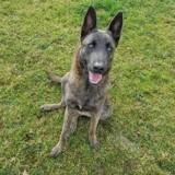 Maltraité puis recueilli par un refuge, ce chien a pris sa revanche sur la vie en intégrant la gendarmerie !