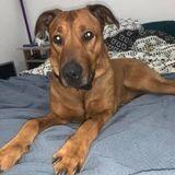 Brest : Simba, le chien qui dormait dans une voiture, a trouvé une famille d'accueil