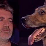 Simon Cowell en larmes après avoir vu un chien jouer sur Britain's Got Talent