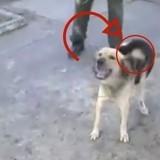 Après avoir perdu ses petits, une chienne adopte le plus inattendu des bébés… (Vidéo)