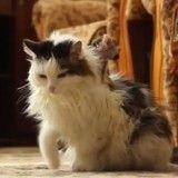 Un chat adopte un bébé singe… et le sauve de la mort !