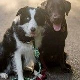 Meilleurs amis, ces deux chiens profitent de la vie et font chavirer Internet