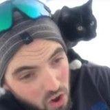 La passion de ce chat aventurier ? Faire de la luge avec son maître ! (Vidéo du jour)