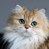 Les 5 chats les plus mignons d'Instagram en 2018