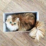 Voici Smoothie, le chat plus photogénique du Web