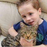 Un chat héros défend son petit maître de 5 ans contre ses agresseurs