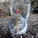Sneezy, l'écureuil qui fait fondre le web avec ses chapeaux !