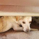 Ce chien avec une énorme tumeur errait dans les rues sans que personne ne l'aide jusqu'à ce que...