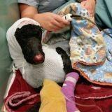 Il risque sa vie pour sauver son chien bloqué dans les flammes