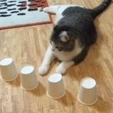 Ce chat est un génie : il retrouve la balle cachée sous des gobelets à (presque) tous les coups ! (Vidéo)