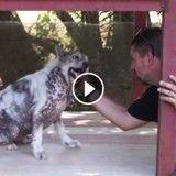 En découvrant qu'il est adopté, ce chien fait une danse de la joie ! (Vidéo)