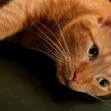 Protégez vous-même votre chat des parasites