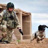 Un héros de guerre et son chien morts au combat
