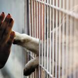 Vous voulez aider une association de protection animale ? Voici un nouveau réseau d'entraide pour être utile !