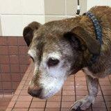 Après 11 ans dans la rue, ce chien se réveille d'une sieste et découvre que sa vie va changer