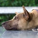 5 solutions pour sortir votre chien de sa déprime