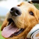 Justin Bieber, préféré à Beethoven par les chiens ?