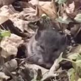 Une femme croise une souris et l'invite à un adorable pique-nique ! (Vidéo)