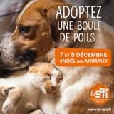 Noël des Animaux de la SPA 2019 : rendez-vous dans les refuges les 7 et 8 décembre !
