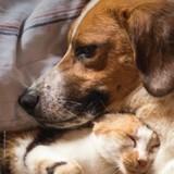 Noël des animaux de la SPA 2019 : 1174 animaux ont été adoptés !