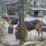 12 chiens sauvés chez un homme déjà condamné pour maltraitance animale