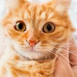 Adoptions solidaires à la SPA : 2000 animaux sauvés grâce à la mobilisation de tous