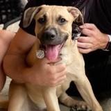 Abandonné à 2 reprises au refuge, ce chien a été adopté par une star mondialement connue !