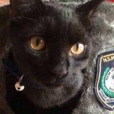 Affamé et perdu, ce chat a conquis le cœur des policiers qui l'ont recueilli
