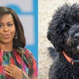 Michelle Obama explique le grand changement que ses chiens Bo et Sunny ont dû vivre