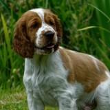 Chien errant emmené chez le vétérinaire : ce qu'il découvre en scannant sa puce fait l'effet d'une bombe !