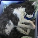 Ce chat de 20 ans, sourd et aveugle, a frôlé la mort mais a eu beaucoup de chance