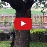 Un écureuil s'amuse à narguer un chien (Vidéo du jour)
