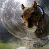 Cet homme inventif fabrique des courses à obstacles incroyables pour les écureuils dans son jardin (Vidéo)