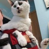 Ce chat de 15 ans ne cessait pas de pleurer jusqu'à ce qu'on le prenne dans ses bras