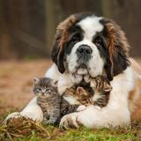 Salon de l'Agriculture 2020 : les chiens et chats mis à l'honneur au Concours Général Agricole