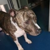Un chien retrouvé sans son maître dans le RER A à Val-de-Fontenay