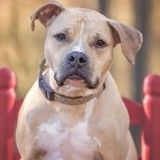Un couple sera bien jugé pour la mort du chien traîné sur la route, mais pas pour acte de cruauté