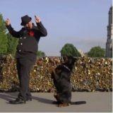 Méfiez-vous des apparences : ce que Stéphane Granet fait avec son Rottweiler est fou !